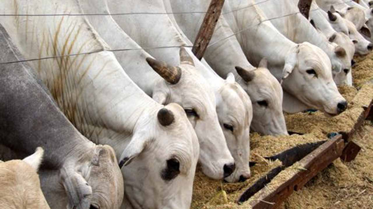 You are currently viewing Cattle Ranching System Project Begins; States agree while others disagree