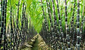 Read more about the article Investment in sugar industry will Accelerate the Nation's Economy and provide jobs for youths-Chief Niyi Adebayo
