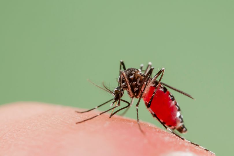 You are currently viewing Warning over rise in disease-spreading mosquitos in UK