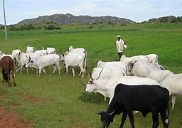 You are currently viewing Grazing Route Gazette not Solution to Conflict