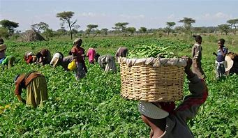 You are currently viewing Agriculture: AfDB, IFAD, Others toBoost Food Production With $800m
