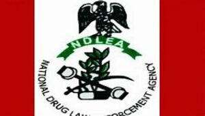 Read more about the article 22 Hectares of Cannabis Farm Destroyed in Edo By NDLEA