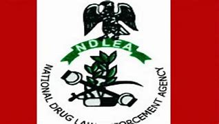 You are currently viewing 22 Hectares of Cannabis Farm Destroyed in Edo By NDLEA