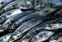 Read more about the article Nigeria Depends On Foreign Markets To Supply 2.2 million Tons Of Fish Annually