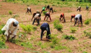 Read more about the article Food Security: FG Reiterates Commitment To Boosting Food Production