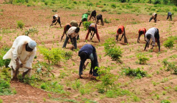 You are currently viewing Food Security: FG Reiterates Commitment To Boosting Food Production