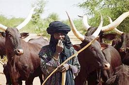 Read more about the article Open-Grazing: Buhari's Grazing Route